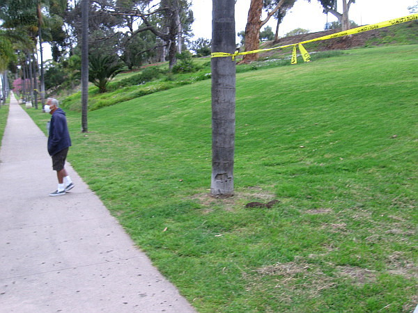 Yellow tape stretched between trees along Sixth Avenue indicates Balboa Park is closed during the coronavirus pandemic.