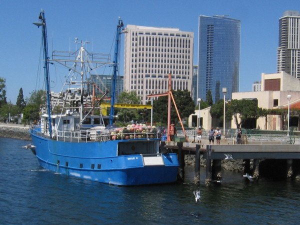 A commercial fishing boat unloads their catch in Tuna Harbor.