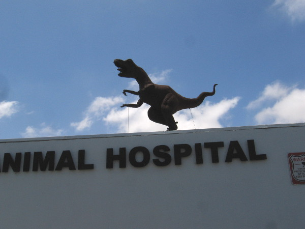 There's a T. Rex on the roof of Avian and Exotic Animal Hospital! It must've escaped!