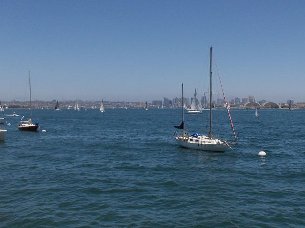 Lots of sails in the distance. Beyond them rises downtown San Diego's skyline.