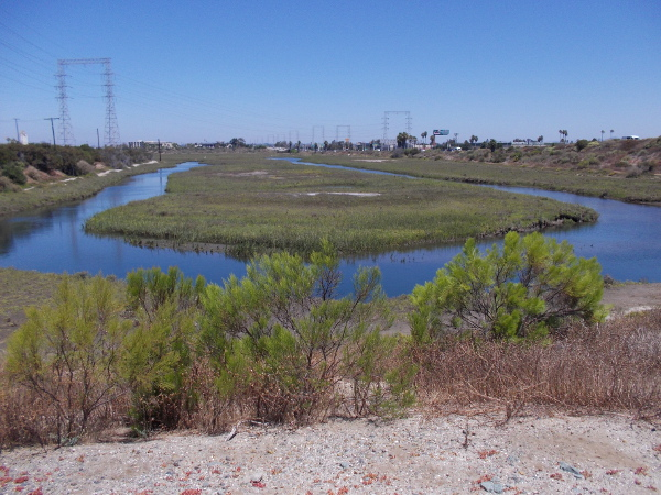 Paradise Marsh is a refuge for many local and migratory birds.
