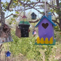 Many colorful birdhouses in Santee trees!