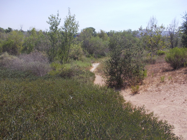 View toward the river broadens from the trail.