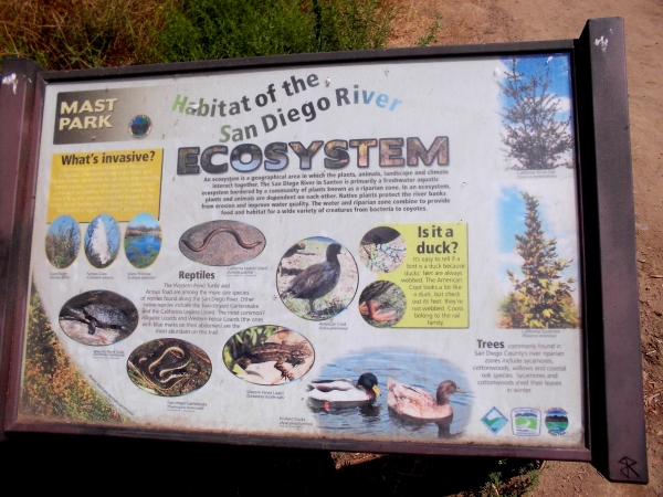 Sign at Mast Park describes habitat of the San Diego River Ecosystem. Snakes, lizards, turtles and ducks live here.