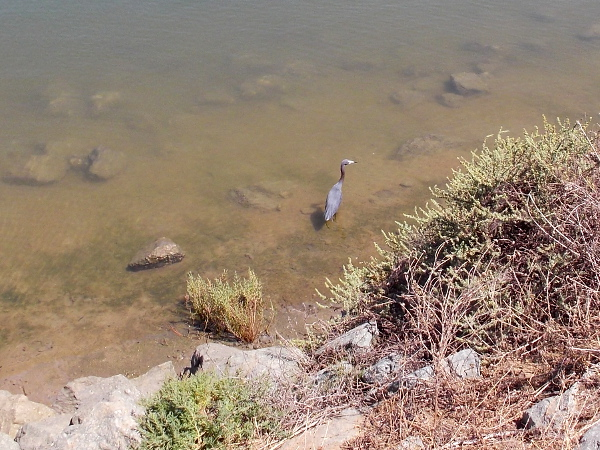 A heron watches for small fish in the nearby water.
