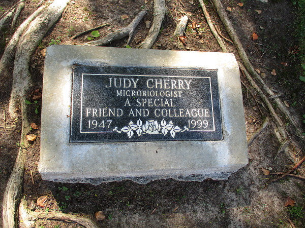 Judy Cherry - Microbiologist - A special friend and colleague.