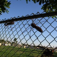 Huge wire insects swarm on park fence!