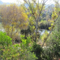 Above bright river trees at Rio Vista!