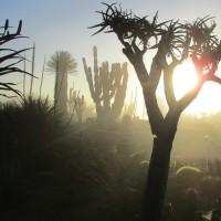Fog at Balboa Park's Desert Garden.