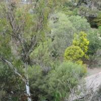 Balboa Park's hidden Australian Garden.