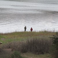A springtime walk along Lake Hodges.
