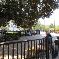 Balboa Park's new Moreton Bay Fig tree platform.