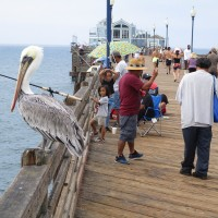 Life and history at the Oceanside Pier.