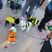 Halloween comes early in Balboa Park!